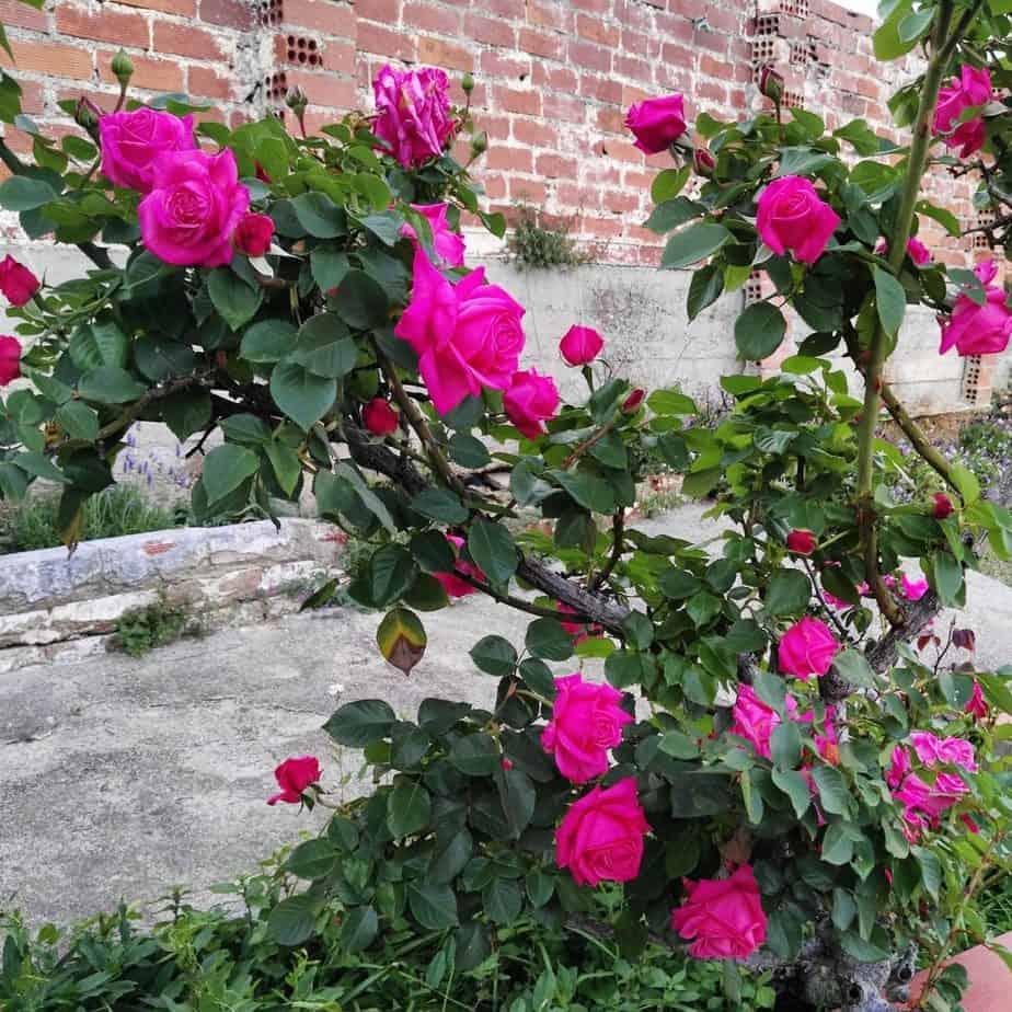 Jabón artesanal natural casero con pétalos de Rosa