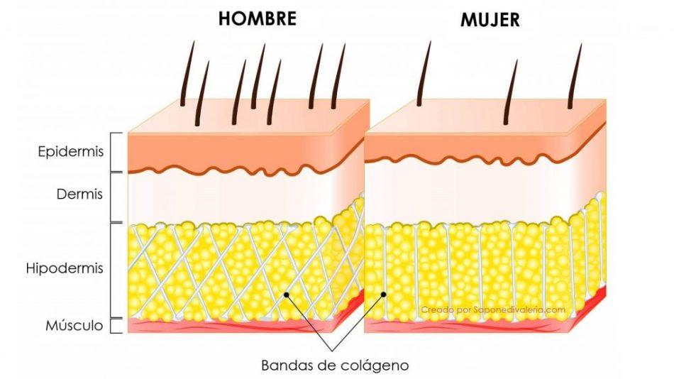 Diferencias entre la piel del hombre y la mujer